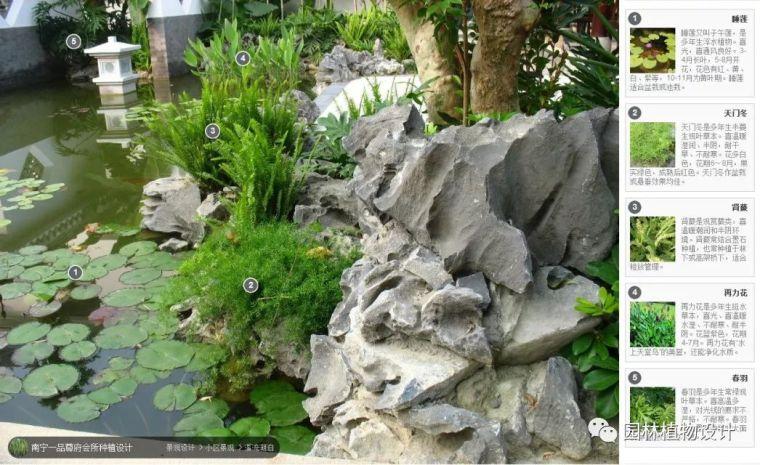 104组精彩植物配置案例(实景效果+植物品种)_8