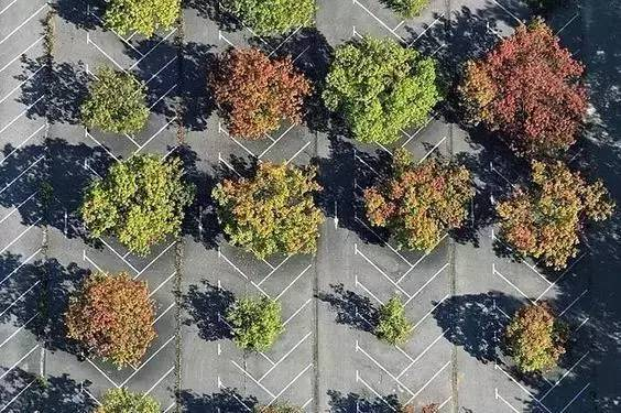 停车场也玩生态_10