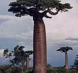 植物界的吉尼斯世界纪录大全-640.webp (30).jpg