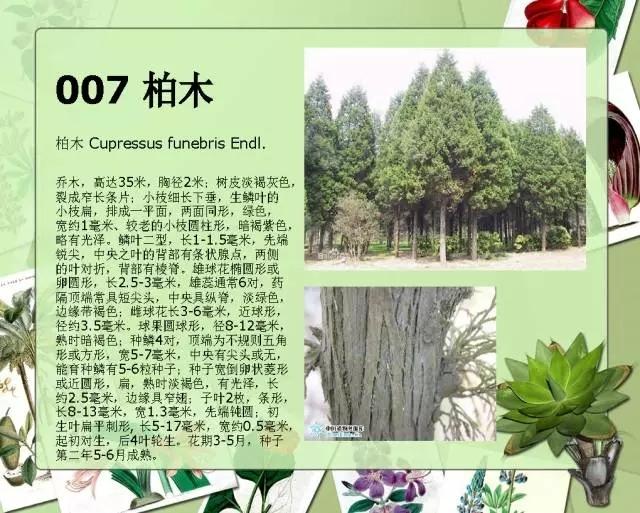 100种常见园林植物图鉴-20160523_183224_010.jpg