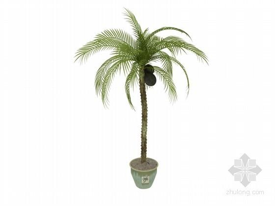 盆栽椰子树3D模型下载