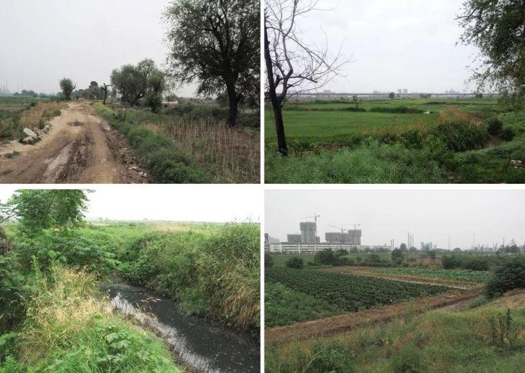案例 渭柳湿地公园_2