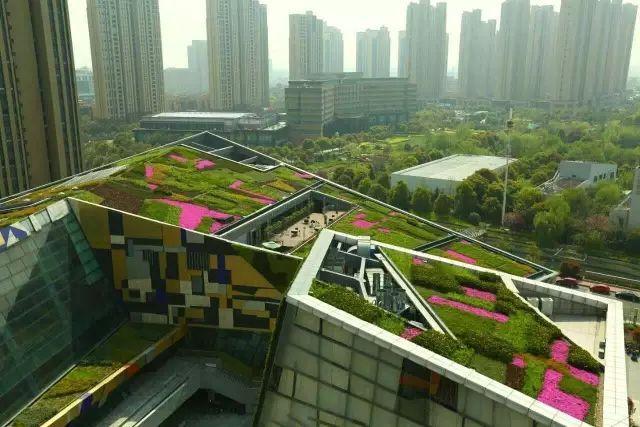 屋顶花园植物搭配原则详解
