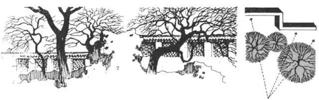 """这些必备的""""植物造景"""",不止是种树种花_22"""