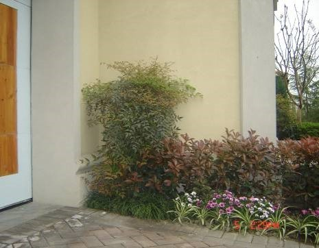 植物组团景观营造——角落空间植物搭配