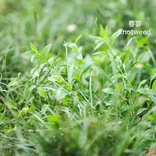 路边的野花不要采,路边的野草要认全!!_20