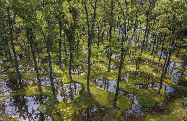 日本建筑师石上纯也设计的梦幻水上花园,细腻到令人发指!