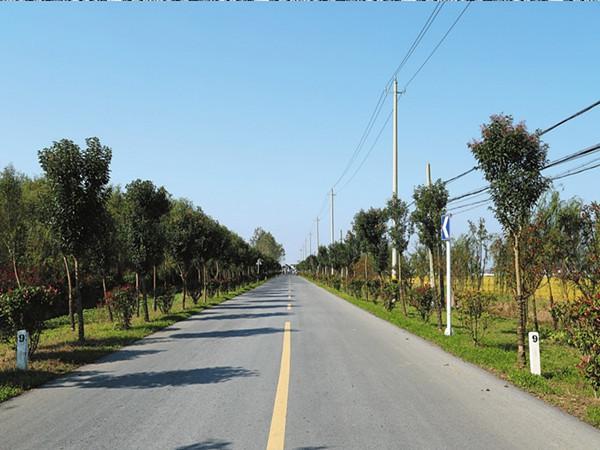 农村公路改造工程可行性研究报告