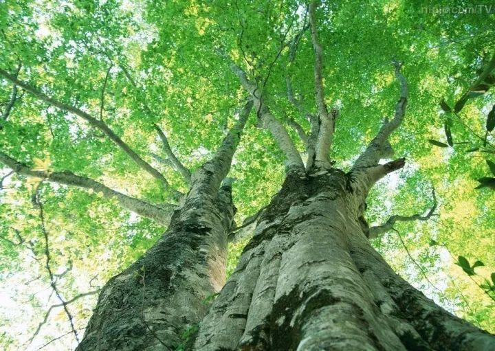 连树都这么拼命,你还有什么理由不奋斗?_1