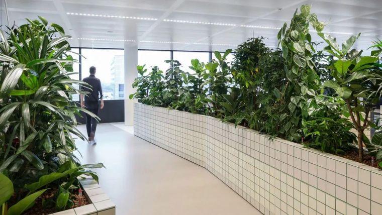 绿树成荫的办公室,上班也有好心情