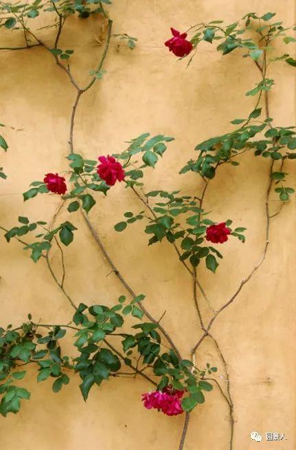 与你在花墙下邂逅·它为你而开_38
