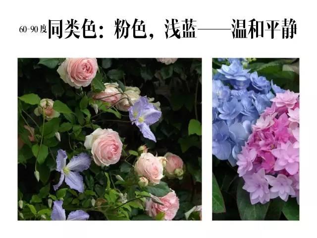 干货|庭院花园中的色彩搭配_8
