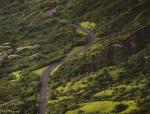城市道路绿化存在的问题及应对措施