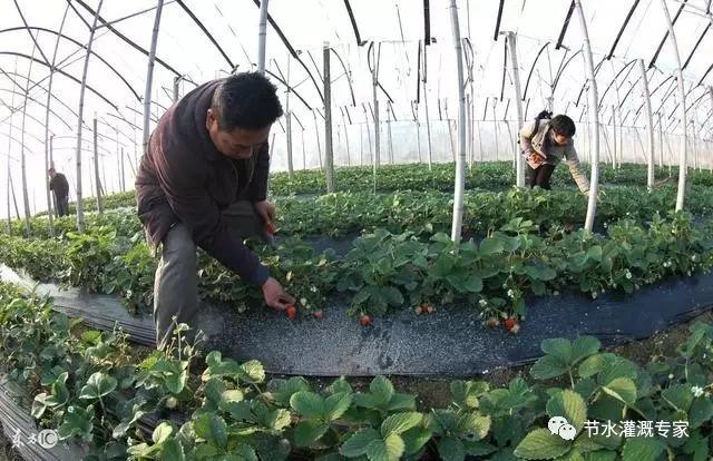探究农业水利灌溉节水新模式_10