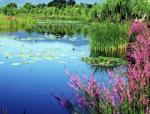 [江苏]花间林海美丽乡村旅游度假区景观设计方案