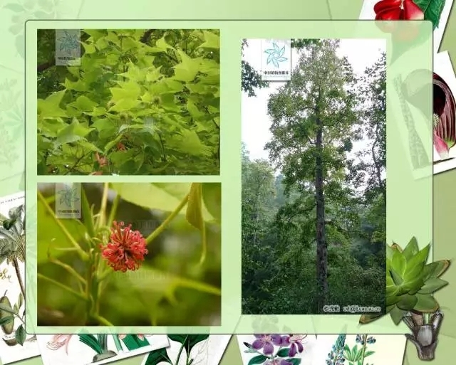 100种常见园林植物图鉴-20160523_183224_053.jpg