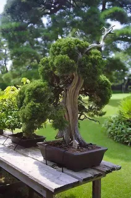 绿植这样摆,你家比园林还要美!_17