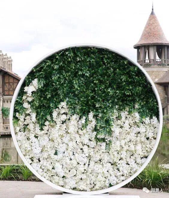 小小的景墙植物,冬天暖暖的超贴心!