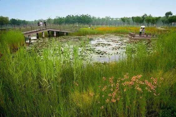 湿地景观|滨水景观与生态景观的共同设计