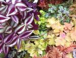 """漫步在色彩斑斓的树林,著名""""彩色""""植物概览"""