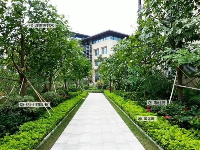 最详细图解:深圳湾三大豪宅景观植物配置!_9