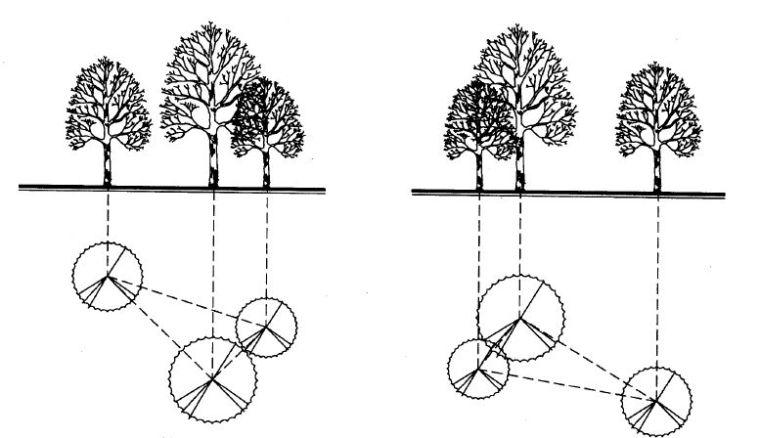 实用 景观植物设计方法(图文解析,值得收藏)_12