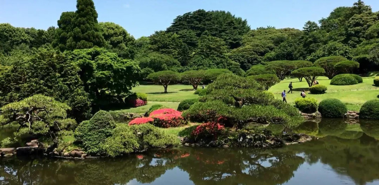 实用 景观植物设计方法(图文解析,值得收藏)_10