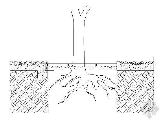 树池剖面图2