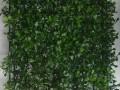 云建筑·宝图 绿植墙的逆袭