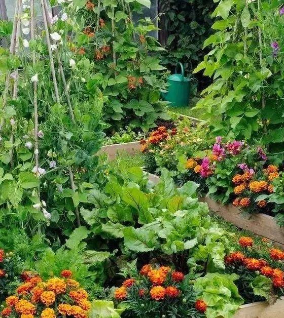 如何用植物装点你的园林景观!_17