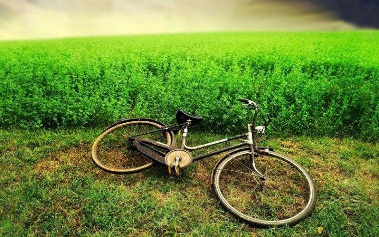 送您一股清新的田园风。_2