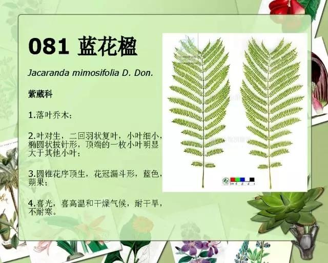 100种常见园林植物图鉴-20160523_183224_104.jpg