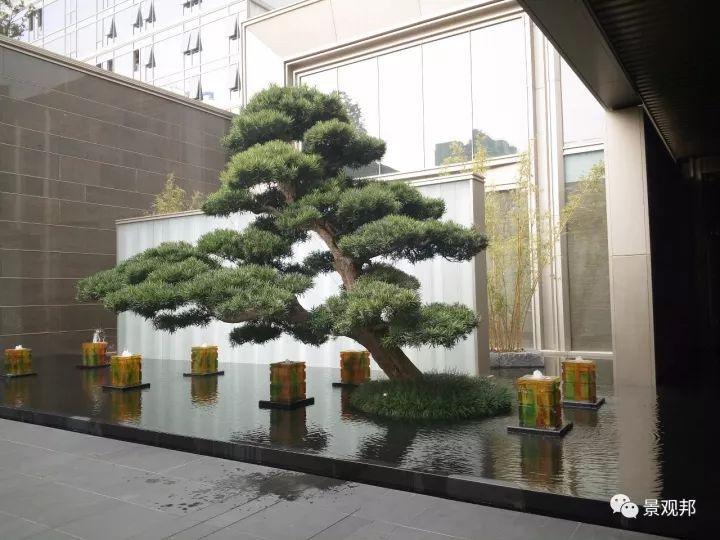 最吉祥的三十种庭院主景树