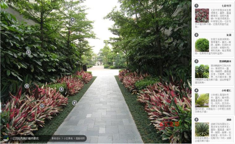 104组精彩植物配置案例(实景效果+植物品种)_85