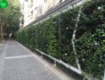 仿真植物墙在日常生活中的多样化应用