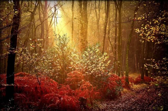 林下地被植物的应用及配置_1