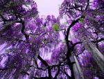植物造景的气势之美,惊艳的藤本之花!