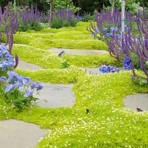 不起眼的小野花,也可以给你的花园带来惊喜_5