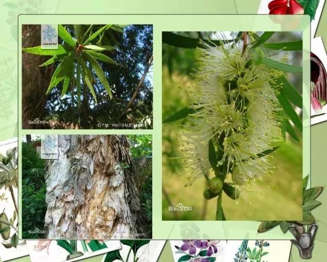 100种常见园林植物图鉴-20160523_183224_031.jpg