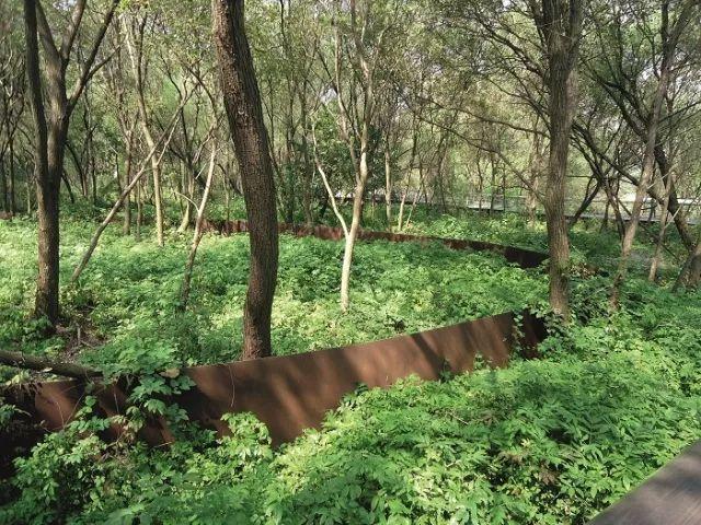 [植物配置]历史景观保护与重建中的植物景观营造_11