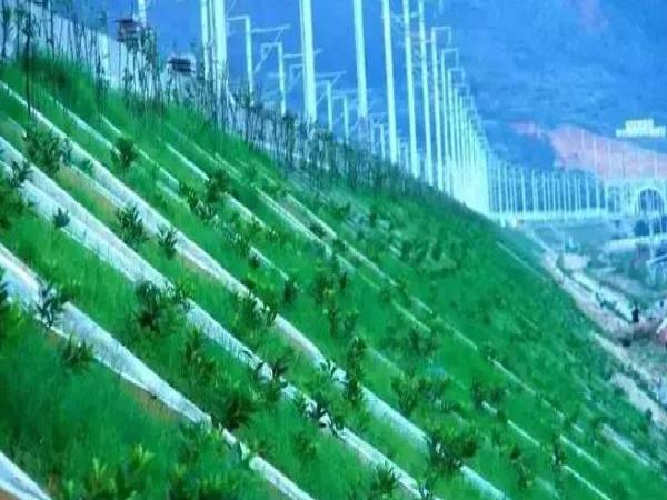 铁路路基边坡苗木栽植施工要点有哪些?