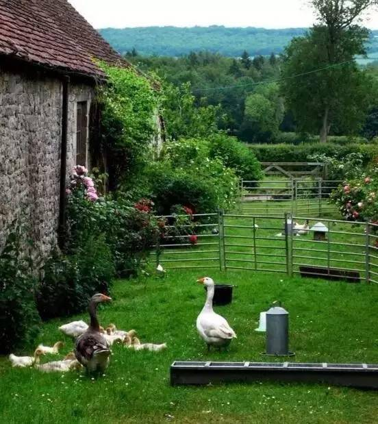 乡村庭院这么美,你有什么理由不喜欢!_10