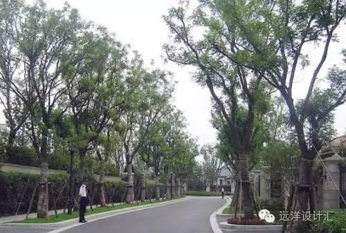 一个会种树的设计师,住宅每平方溢价3000元_49