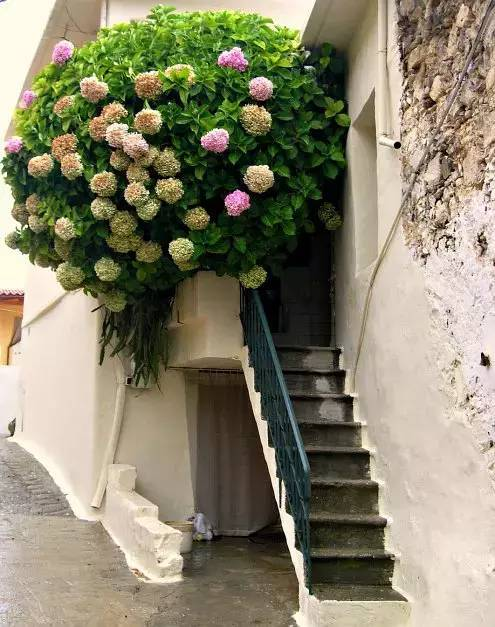 想要这样一个阳台,过小日子,看花开_2