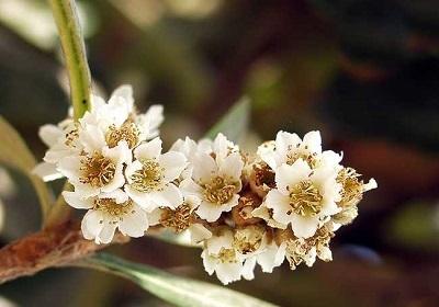 香花植物-嗅觉盛宴_37