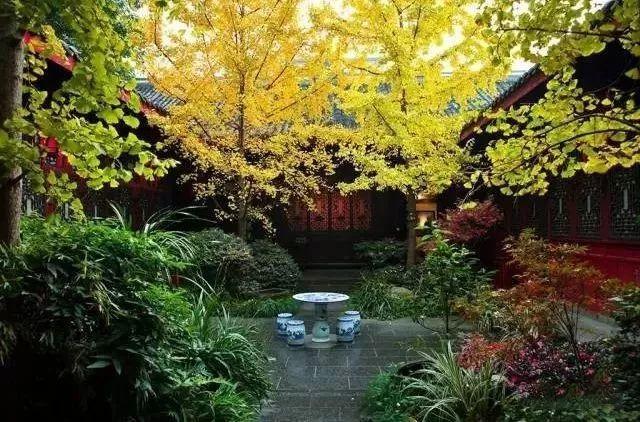 这才是中国人的院子,秋天美到骨子里