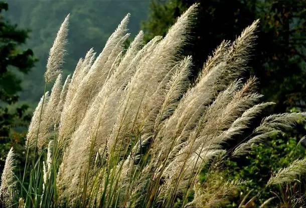 深秋的山草,美如画_20