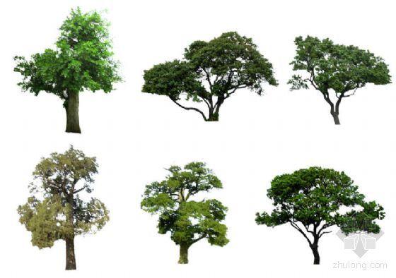 ps树效果图素材图片
