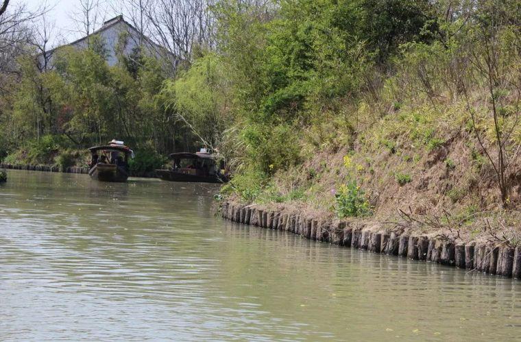 河道护岸上的离心仿木桩