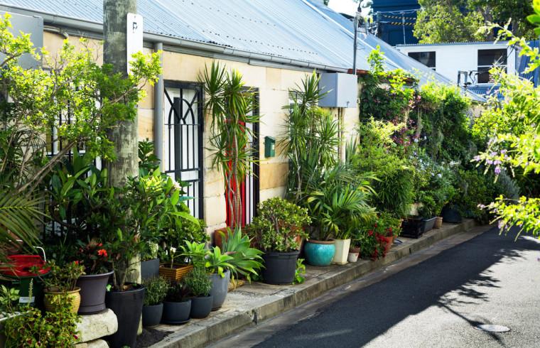 澳大利亚Cat Alley城市花园